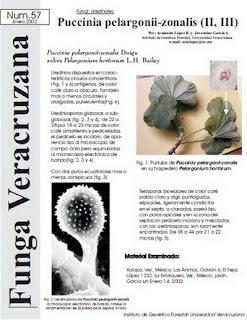 Puccinia pelargonii-zonalis (II, III)