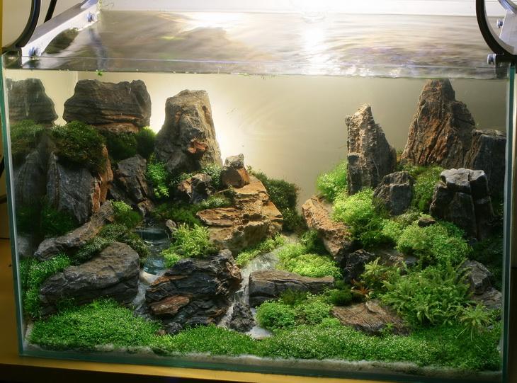 kalakay murag: foto-foto aquascaping