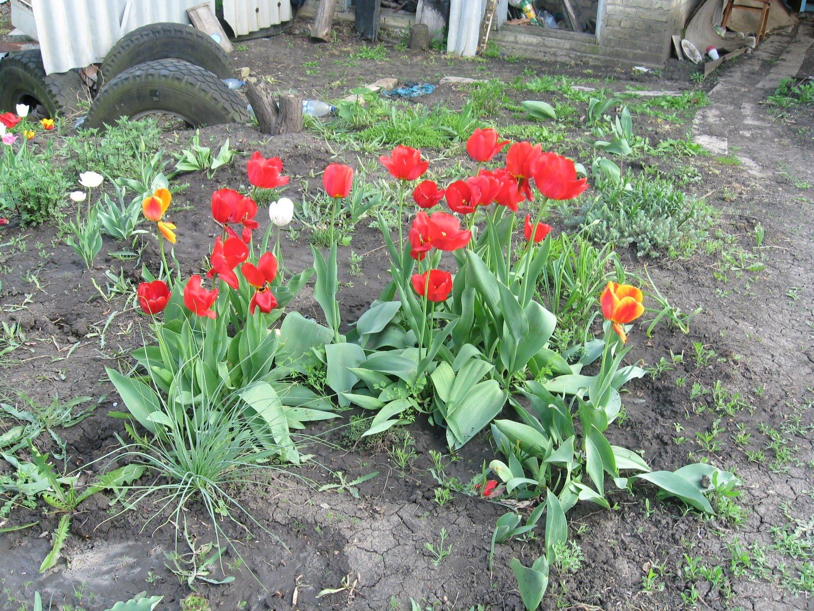 Цветы разные и как называется 6