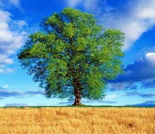 Be a Big Tree