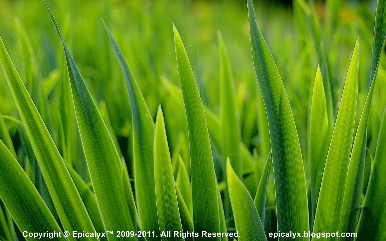 http://2.bp.blogspot.com/-JhHv8KIgMA4/TsDV5fBNksI/AAAAAAAAALA/C-ardCZHtmI/s1600/Spikey+Grass+HD.jpg