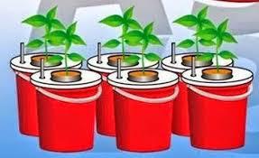 tanaman hidroponik cabe sistem wick
