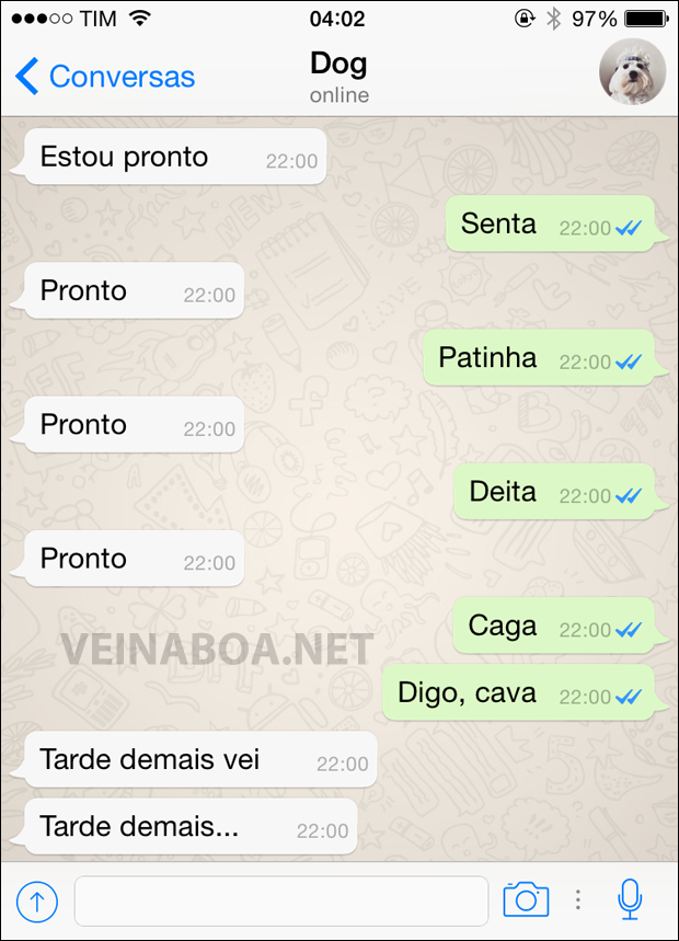 08 Mensagens se meu cachorro tivesse Whatsapp - Gnvision - 2015 - 2016 8