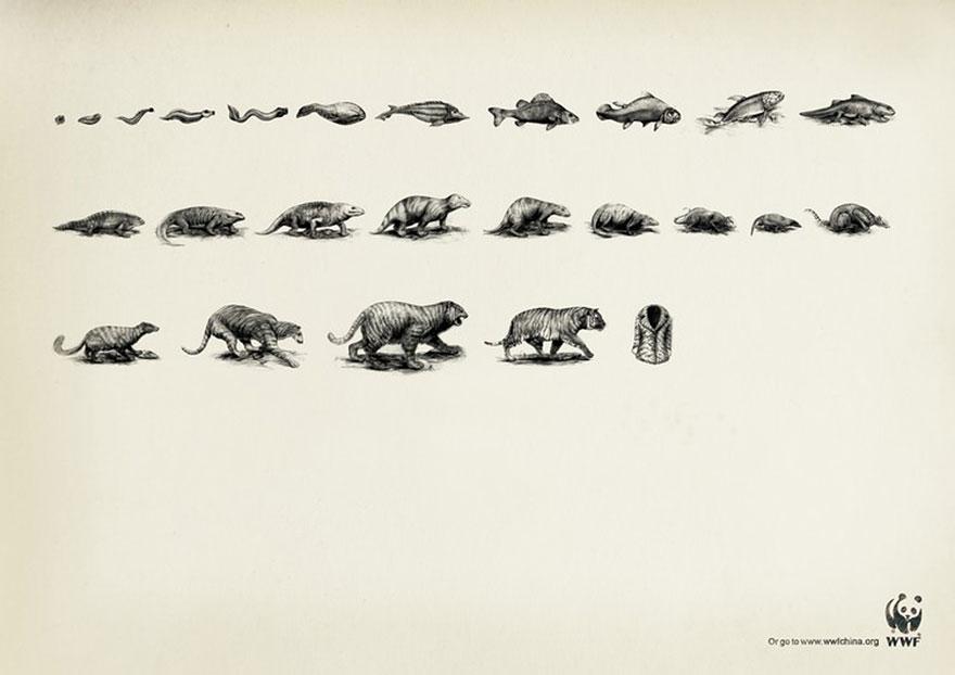 WWF: Evolution