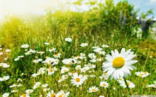 En primavera...
