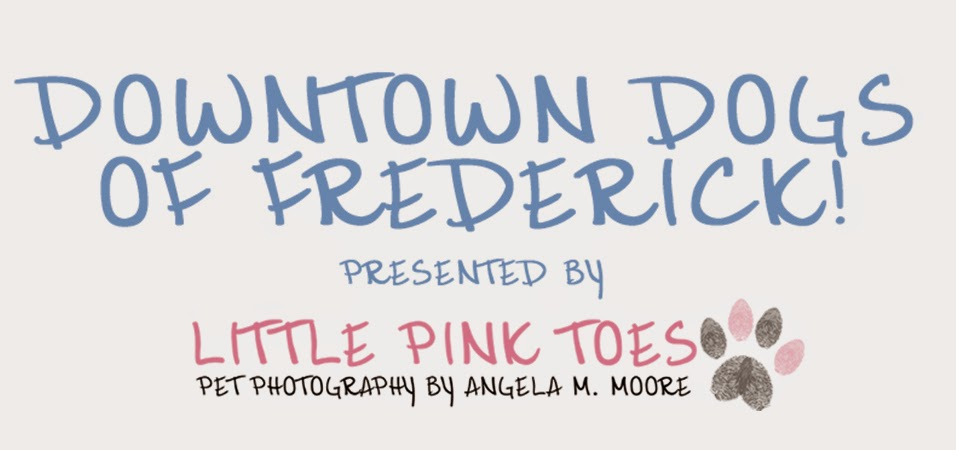 Downtown Dogs of Frederick!               Presented By Little Pink Toes Pet Photography!