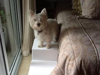 camas altas e escadas para cães