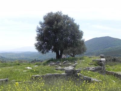 ΑΡΧΑΙΑ ΜΕΣΣΗΝΗ - ΑΛΩΒΗΤΟ ΜΕΣΟΓΕΙΑΚΟ ΤΟΠΙΟ