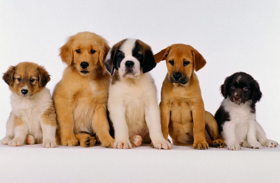 Different Breeds Of Dogs Cutest Puppies Pictures Picture Of A
