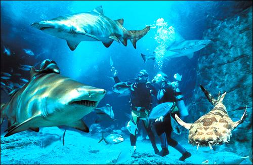 busan aquarium entertainment information oceanis aquariums have a ...
