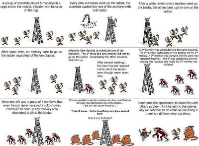 Monkey innovation