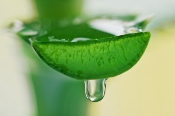 Aloe Vera Juice Weight Loss