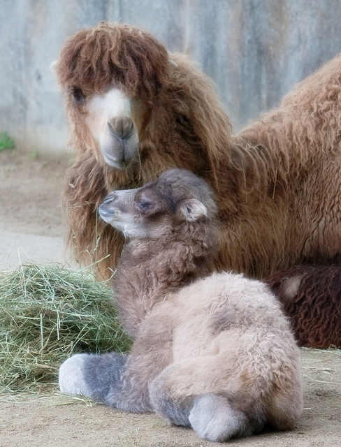 pictures of animals and their babies