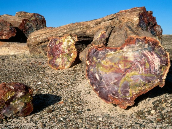 Imagine that you walk Petrified-Forest-National-Park-Arizona-580x435