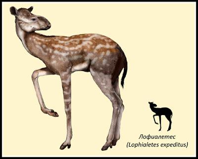 Lophialetidae Lophialetes