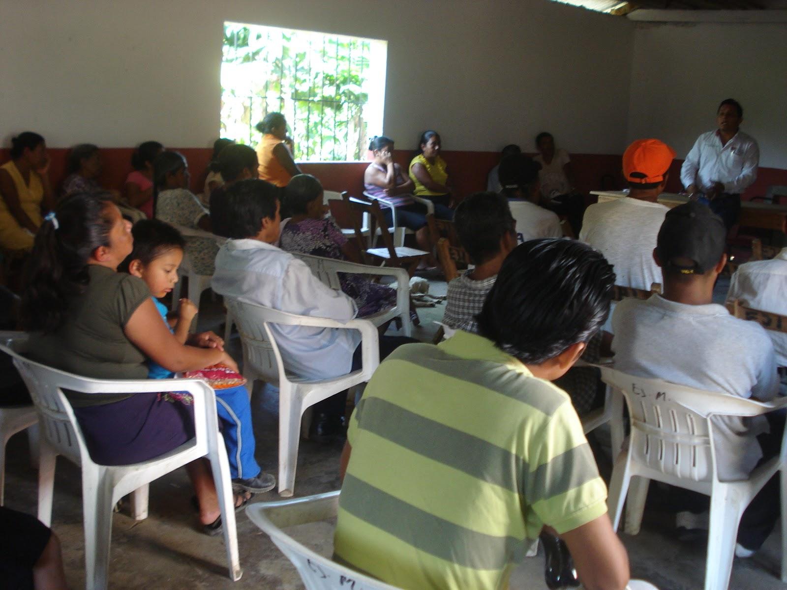 Promueven la creaci n de viveros comunitarios en for Viveros del sureste