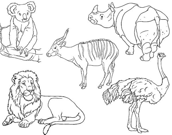 Dibujos para Colorear y Manualidades: Animales salvajes para colorear