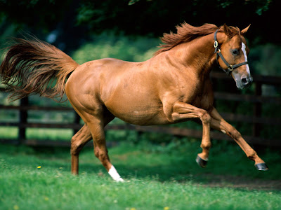 Beautiful Running Horse Brown Wallpaper