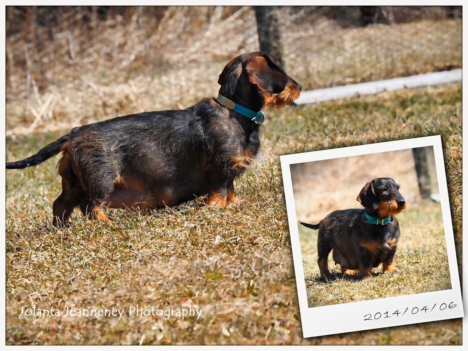 Born To Track Blog Tuesday And Tommys Puppies A New Litter Of
