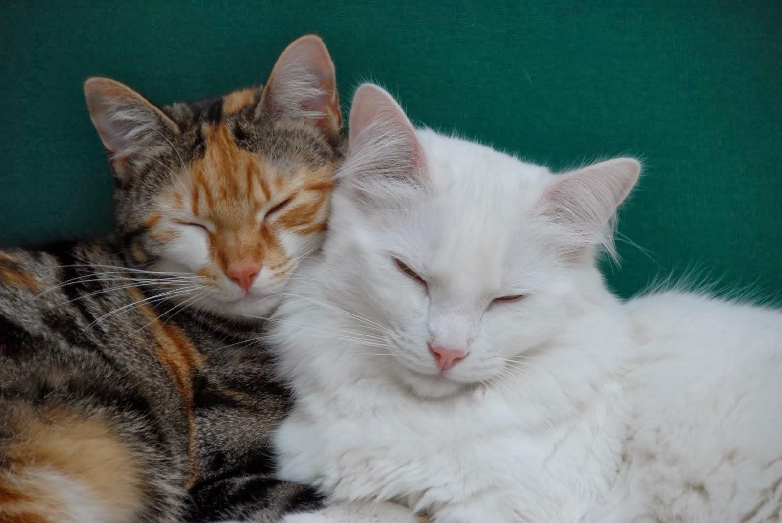 Les minous : Zoé et Clovis