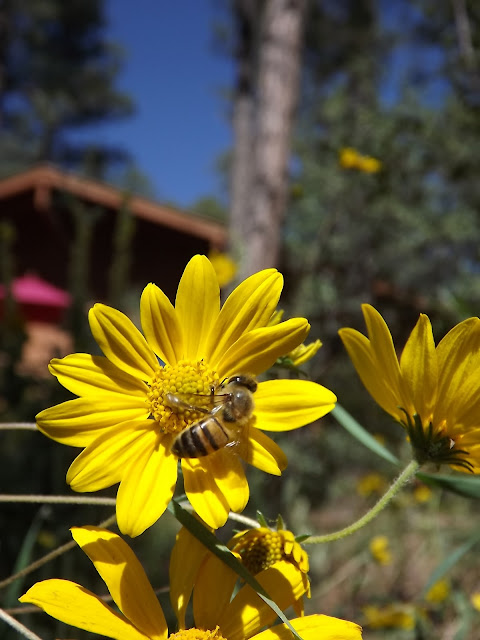 bee on flower, yellow flower and bee