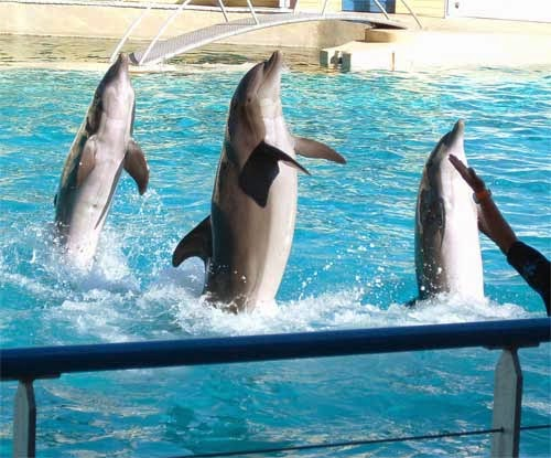 "dolphin intelligence and interaction with humans Why dolphins are deep thinkers and so gull-baiting has become a hot game among the dolphins ""intelligence"" is a for both the dolphins and the humans."