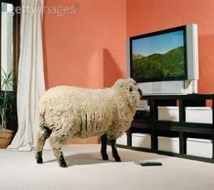 La televisión. Una caja no tan tonta Borregoantelatele