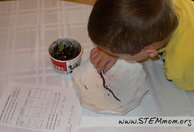 "Data Collection on ""Do Worms Smell?"" Experiment from STEMmom.org"