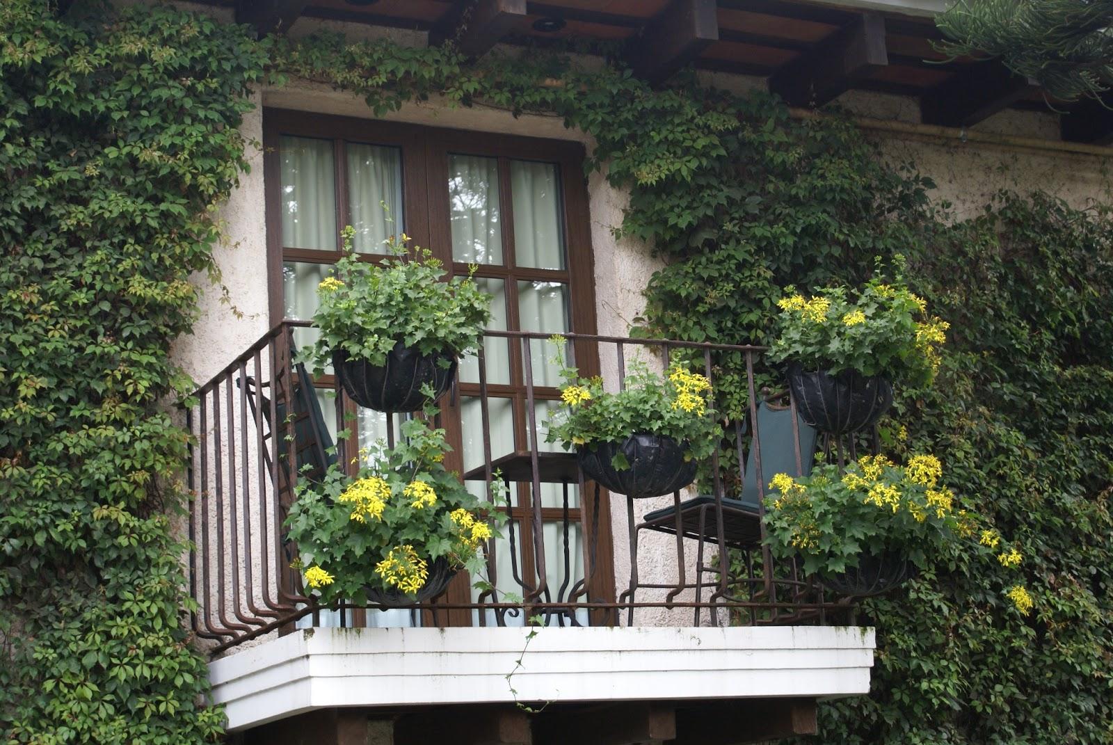 As mate al balc n - Plantas de balcon ...