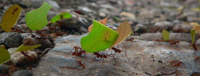 Ants Found To Be Stronger Than Initially Thought