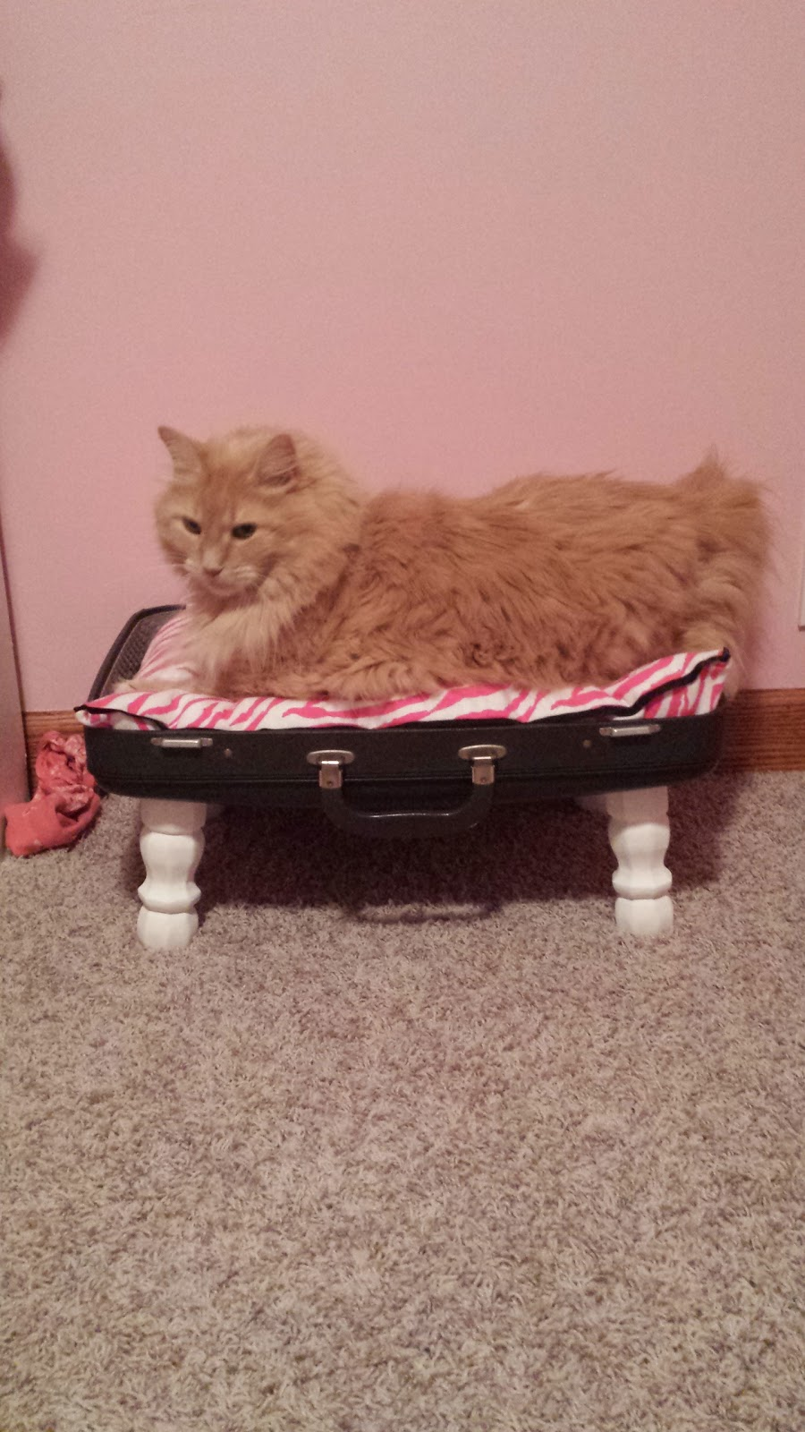 cat bed, old suitcase, DIY, repurpose