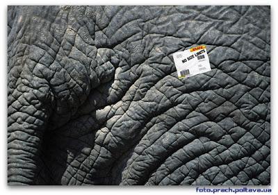 Рекламный плакат почтовой компании DHL - доставим даже слона