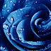 Imagem de Fundo - Flor azul com gotas de água