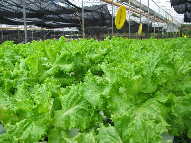 Yoki Farm, zhequia.blogspot.com, #FTWtravels, Tagaytay