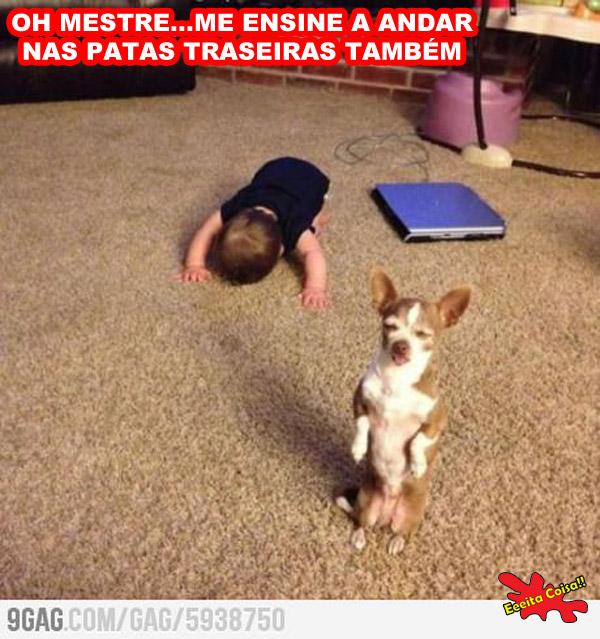 mestre, cachorro, crianca, aprender a andar, eeeita coisa