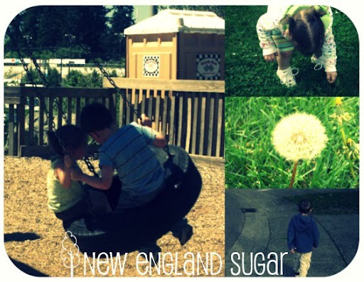 new england sugar