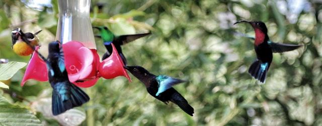 Jardín de Balata, lo mejor de Isla Martinica