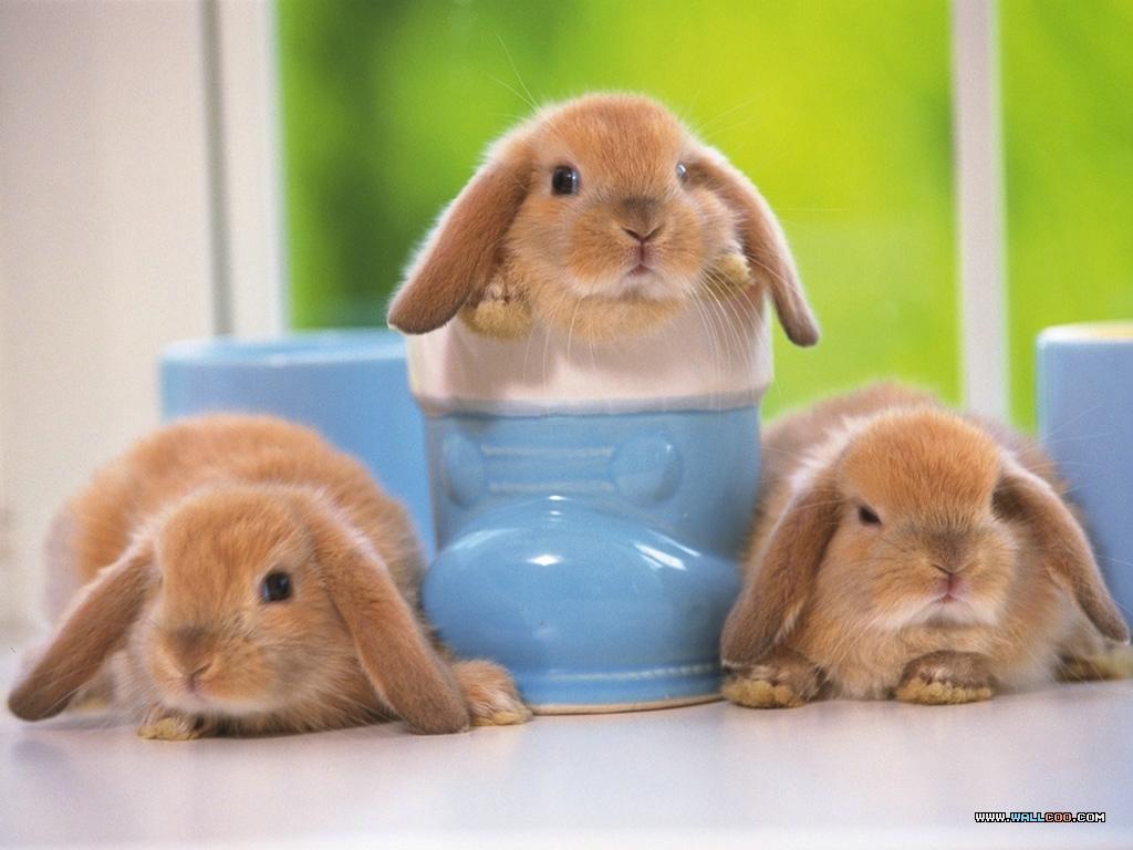 baby rabbits photography