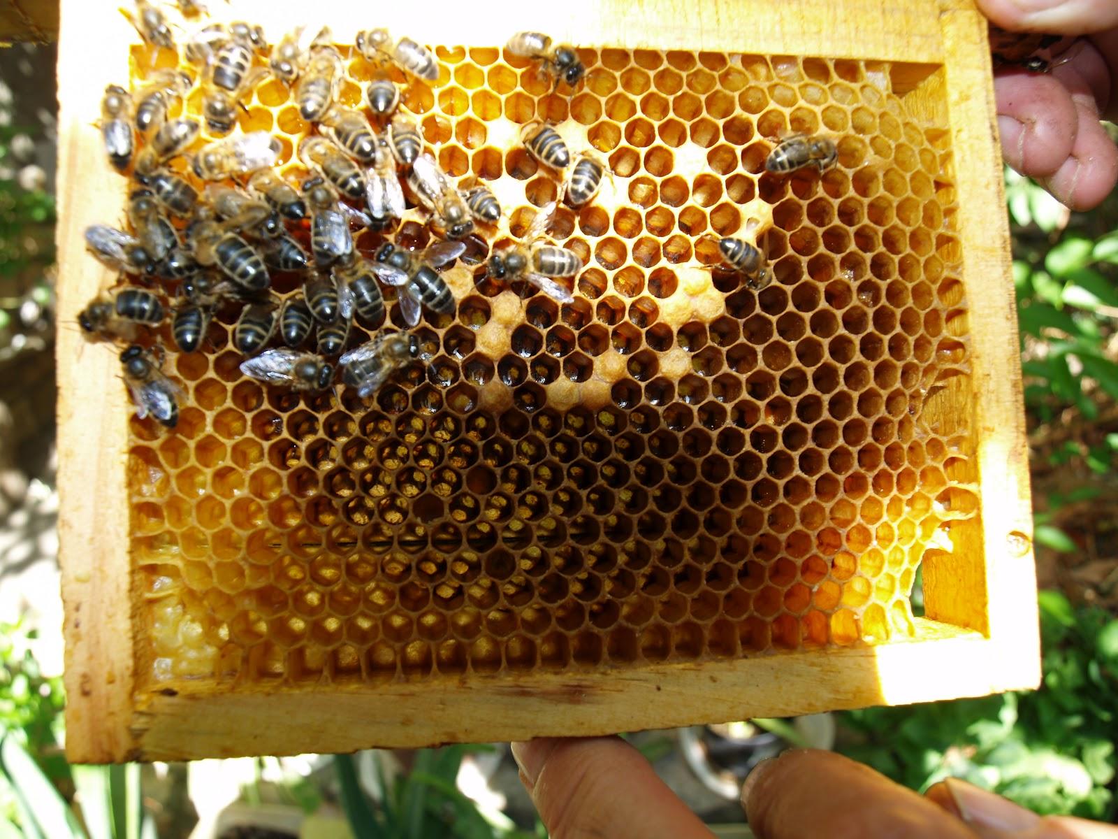 El retabillo elaboraci n de la miel en zuera for Elaboracion de estanques para piscicultura