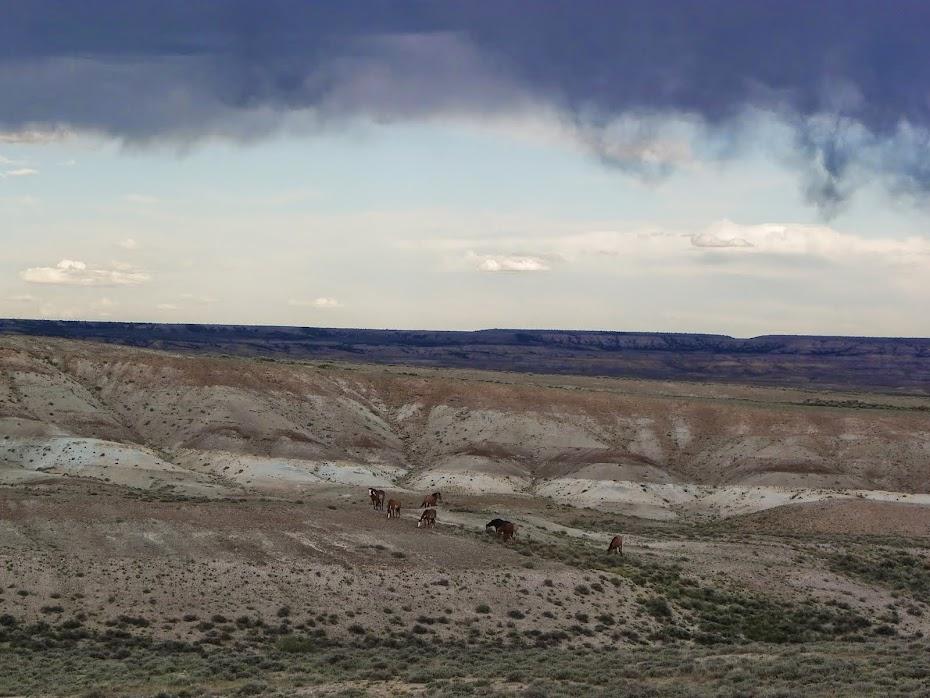 Sand Wash Basin Wild Horses