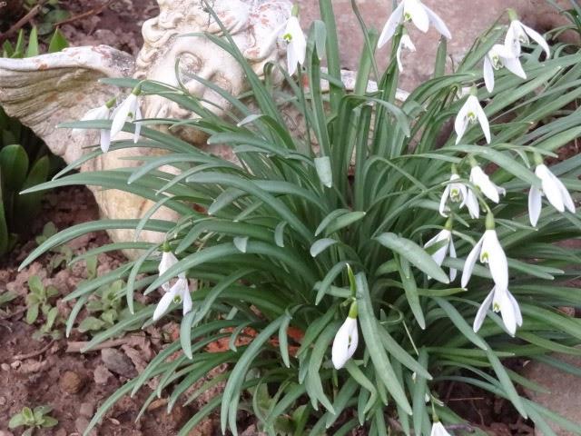 Blumen www.filines-testblog.com
