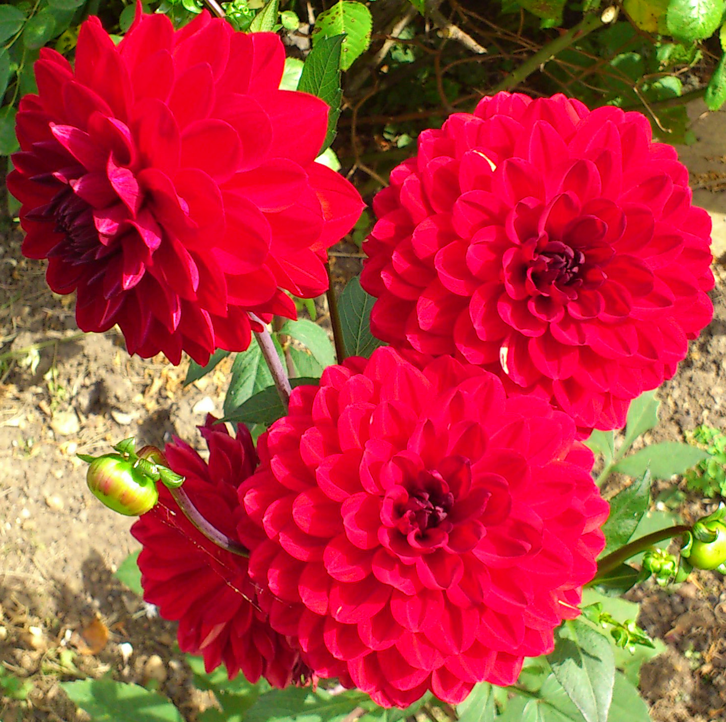 Flowers by Shamini: Not-so-flat flowers