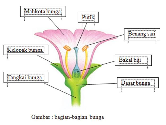 Fungsi Bagian Dan Struktur Bunga Lengkap Bocah Kampoenk Just