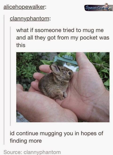 funny cute bunny picture