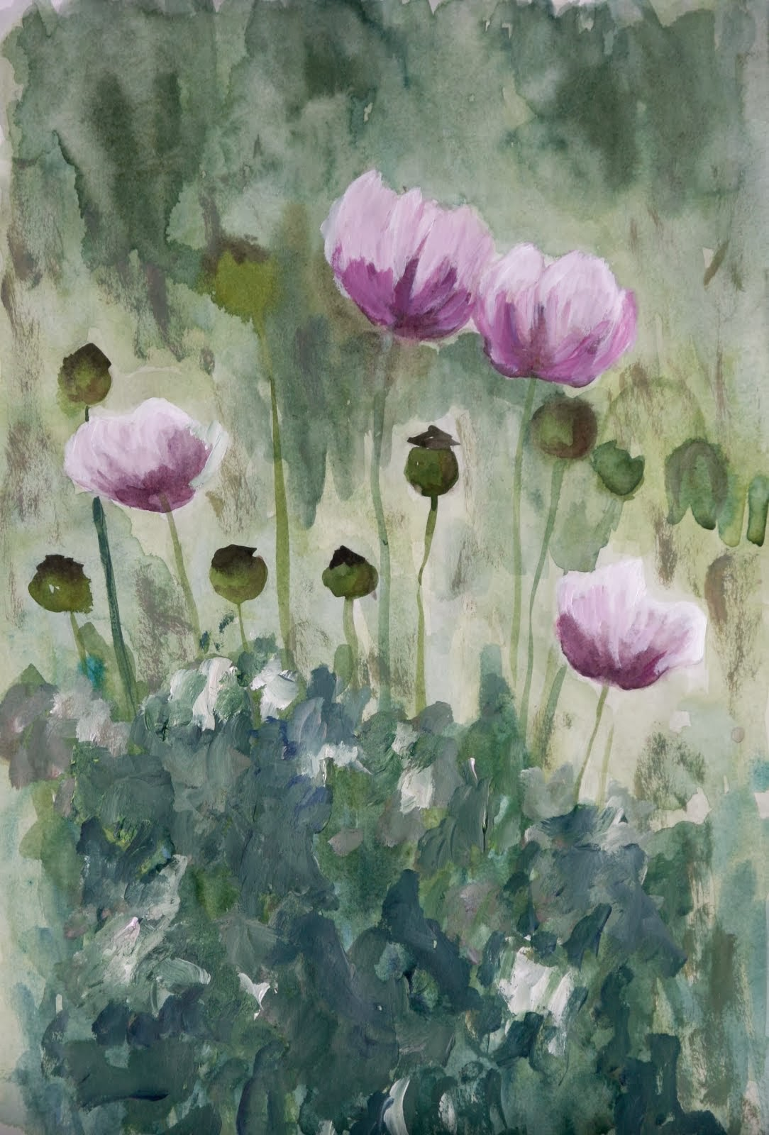 Opium Poppies up at Mas del Sol