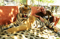tiger kingdom, Chiang Mai, chiang mai, Tailàndia, Tailandia