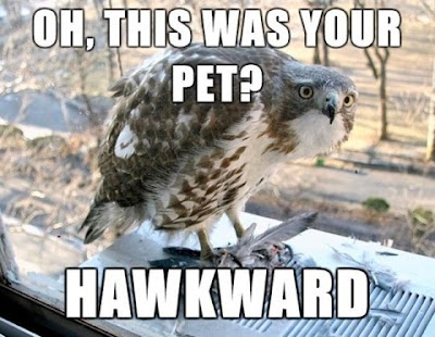 Hawks can be mean