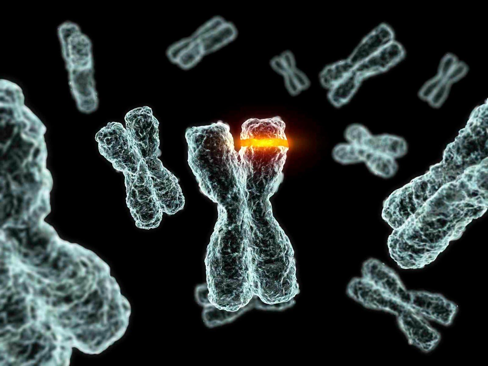 Enfermedades genéticas del ADN mitocondrial humano