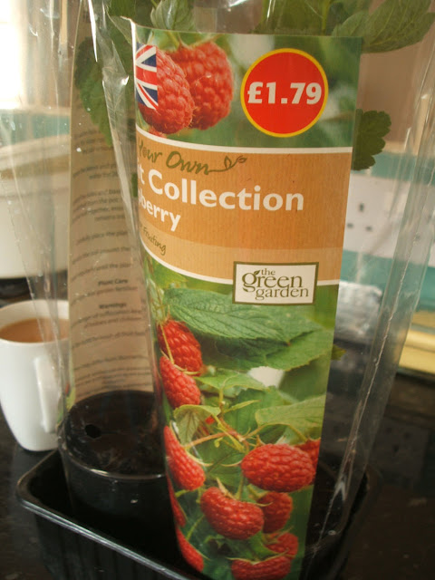 aldi green garden range of fruit plants raspberry