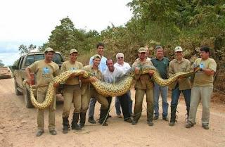la anaconda del amazonas
